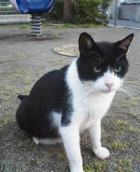 ジロに似た猫発見